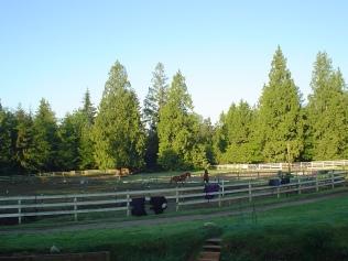 Beautiful Farm Morning